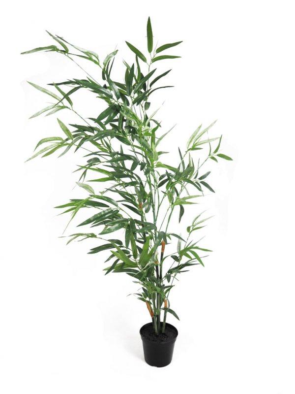 Bambus Im Topf 90cm Grun 1705 53